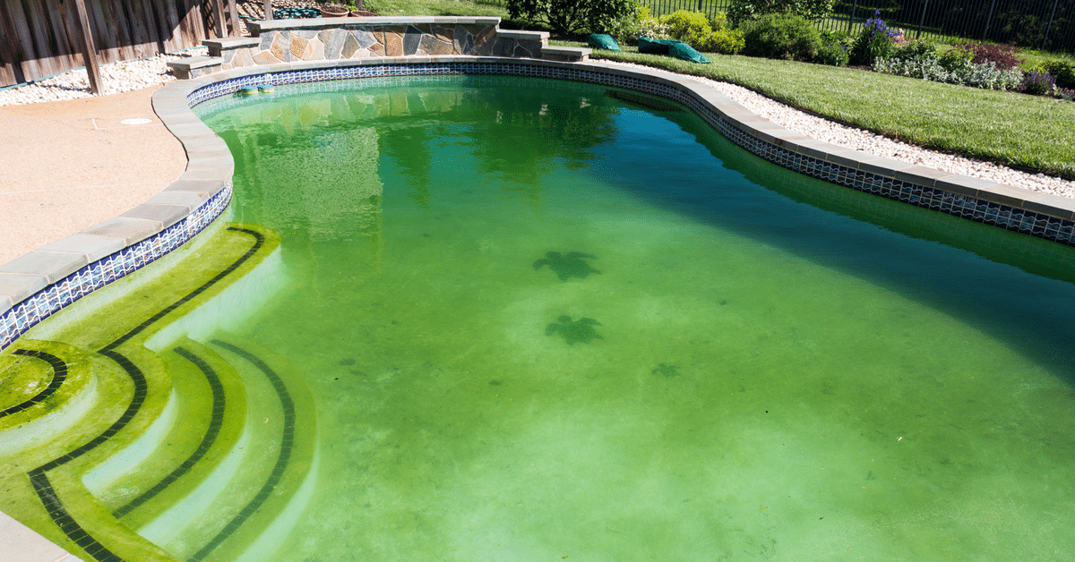 Green Pool Cleaning Service in Pinellas County