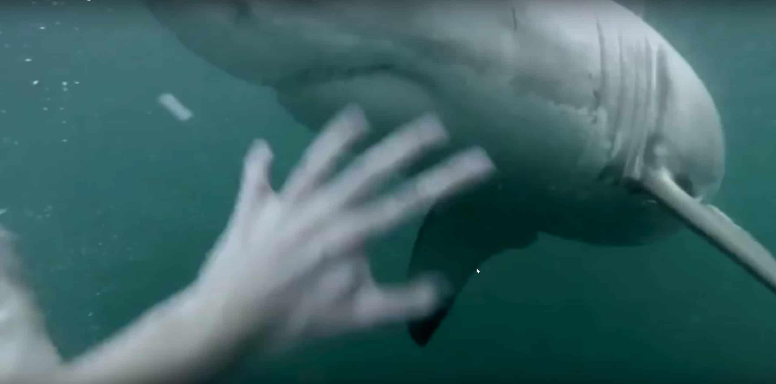 St-Petersburg Man Fights Off Shark In Backyard Pool