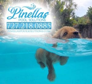 pool service Saint Petersburg florida puppy