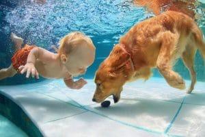 pool service Clearwater Saint Petersburg florida